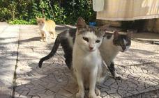 Anima inicia un proyecto para controlar colonias de gatos callejeros en Villanueva de la Serena