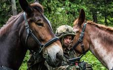 Los cascos de la OTAN