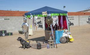 Una veintena de perros compiten en obediencia en Badajoz