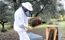 La mortalidad de las colmenas extremeñas baja este invierno