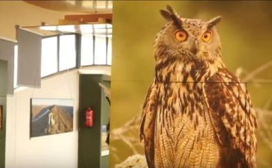 El Birdcenter de Monfragüe celebra este sábado su primera 'noche de aves'