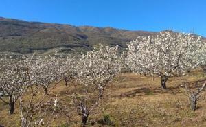La primavera comienza en Extremadura con temperaturas suaves