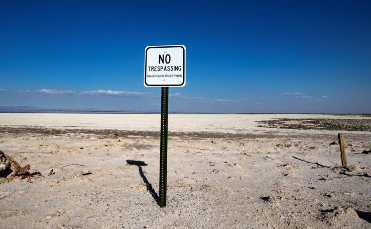 Especies de aves en peligro de extinción en el Lago Salton