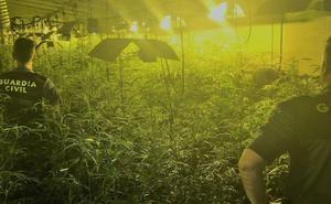 El cultivo de marihuana crece bajo techo en Extremadura