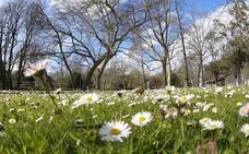 La primavera ha venido, o no