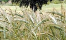 APAG pide una reunión urgente de la Mesa de la Sequía por la falta de lluvias