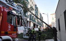Caída de un árbol por el viento en Don Benito