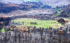 El proyecto Mosaico de lucha contra incendios se extiende a la Sierra de San Pedro