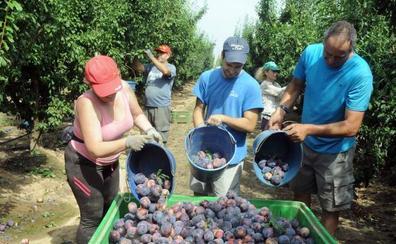 La aplicación del salario mínimo impide que se firme el nuevo convenio del campo