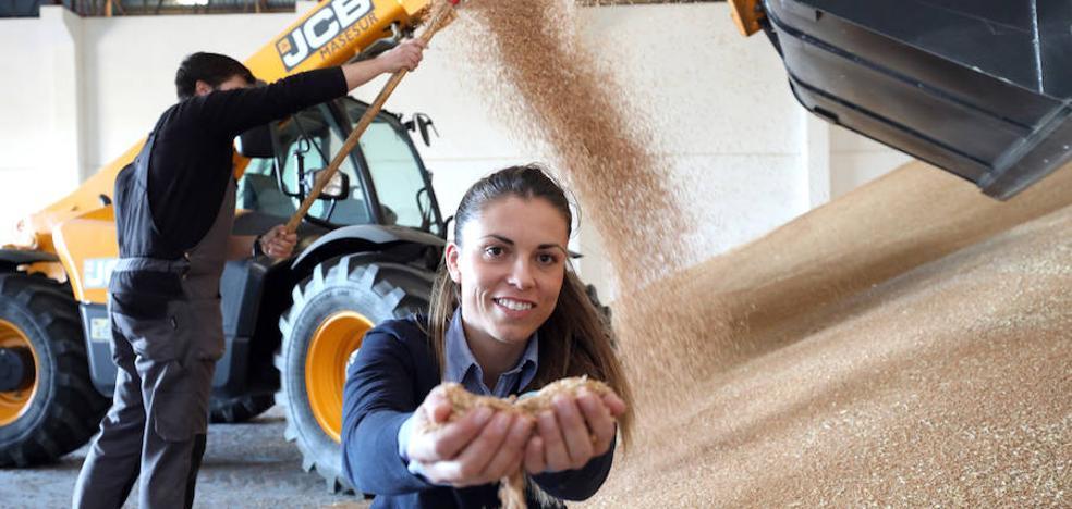 El cereal extremeño afronta una incierta campaña por producción y precios