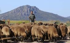 La oveja negra del ovino extremeño