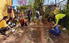 Suerte de Saavedra combate los solares abandonados con huertos y árboles