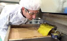 La producción de aceite de oliva supera las 70.000 toneladas