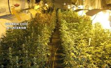 Detenido por cultivar mil plantas de marihuana en Tiétar