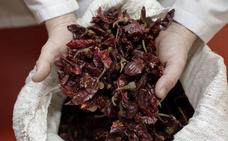 Los productores de pimentón se concentrarán el 17 de abril contra los «precios ruinosos»