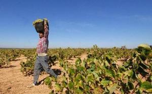 Apag califica de «parche» la nueva orden de reestructuración del viñedo