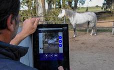 A caballo entre belleza y tecnología