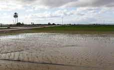 Las últimas lluvias mejoran las perspectivas de la campaña del cereal