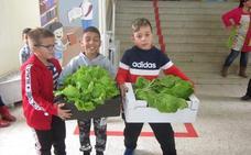 El huerto escolar del colegio Gregoria Collado empieza a dar sus primeros frutos