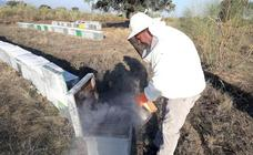 La producción de miel de primavera será la menor de los últimos 15 años