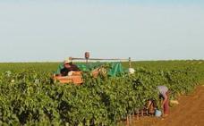 Las obras para transformar en regadío 260 hectáreas de Villanueva del Fresno comienzan en mayo