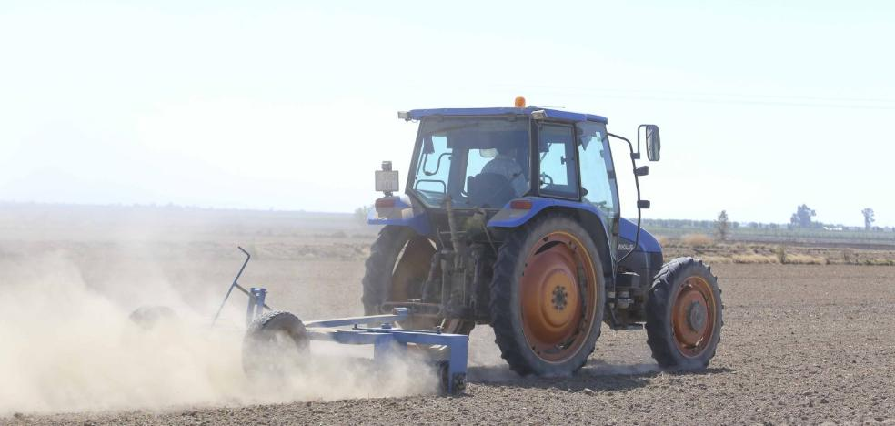 Palazuelo siembra arroz en seco para acabar con las malas hierbas