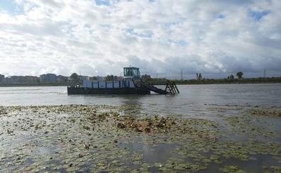La CHG abre la puerta a dragar el río Guadiana para acabar con el nenúfar