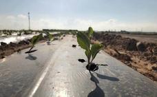 Plásticos que se pueden dejar en la tierra después de la cosecha