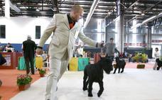 Badajoz acoge el domingo la 39 Exposición Internacional Canina