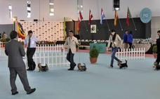 Una exposición canina en Badajoz reúne a un millar de perros de múltiples países