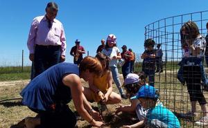 Majadas de Tiétar planta 190 encinas en la dehesa boyal