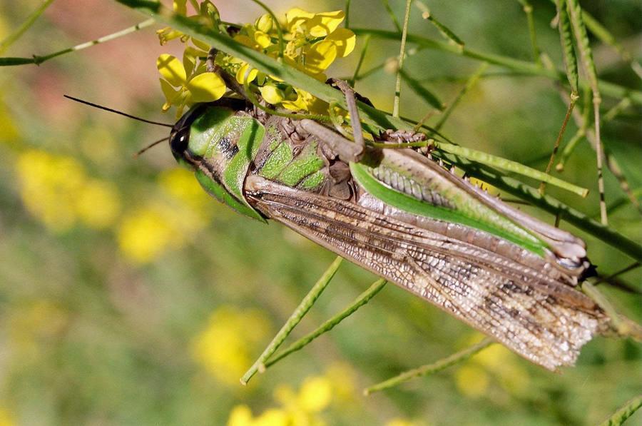 Extremadura y Portugal lucharán juntos contra las plagas en la agricultura