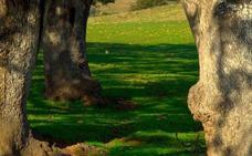 La Feria de la Dehesa de Oliva de la Frontera potenciará el desarrollo sostenible de este ecosistema