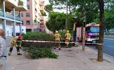 El viento tira varias ramas de árboles en Cáceres