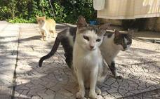 Los veterinarios de Badajoz alertan de la proliferación de colonias de gatos silvestres