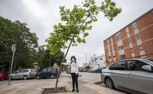 «Solo le deseo un día de alergia a quien decide poner estos árboles»
