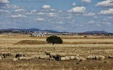 Iberdrola invertirá 98 millones en la primera fotovoltaica de Cáceres