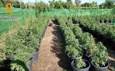 La Guardia Civil encuentra 256 plantas de marihuana en una parcela de Villanueva