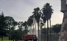 Arde una palmera en el Parque de los Sitios