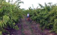 Activan las medidas para evitar los robos en el campo en Villanueva de la Serena