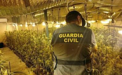 Siete detenidos por cultivar 2.350 plantas de marihuana en naves alquiladas de La Haba