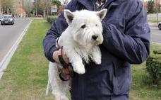 El perro 'Cachas' de Valladolid tendrá una custodia compartida semestral con cada dueño a 700 kilómetros