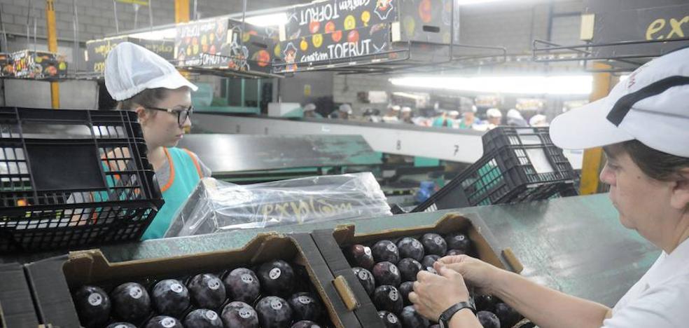 Patronal y sindicatos del campo negocian que la jornada laboral pueda ser flexible