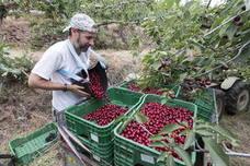 Los cereceros del norte critican que continúen sin la misma reducción del IRPF que otros productores
