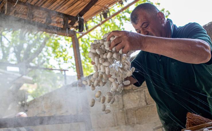 Cultivo de gusanos de seda, en Turquía