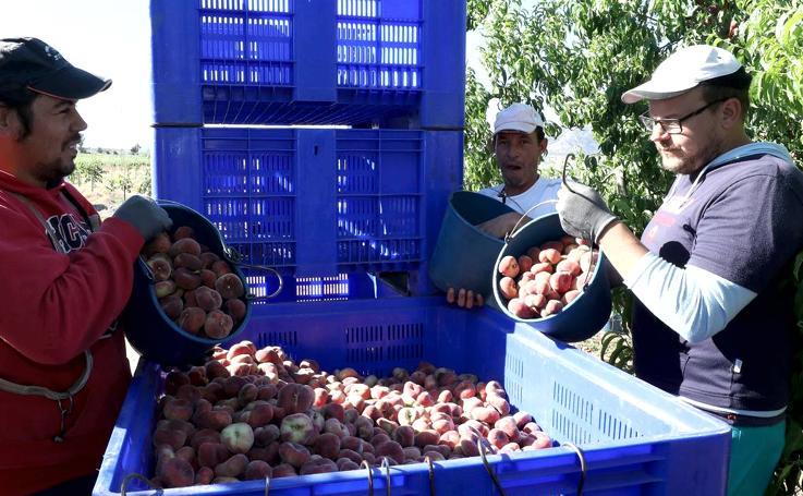 La venta al exterior supone el 75% del mercado de la fruta extremeña