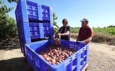 Los empresarios piden mano de obra extranjera para recoger la fruta