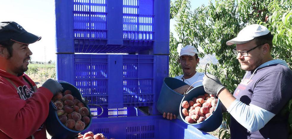 La asociación de fruticultores lleva a la justicia la mesa del convenio del campo, que aceptó el laudo del SMI