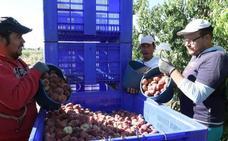 CC OO y UGT denuncian que las centrales hortofrutícolas no pagan la subida del SMI