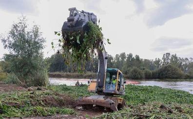 La UME regresará en octubre a Extremadura para seguir retirando camalote del río Guadiana